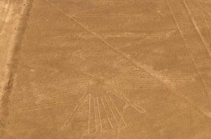 nazca-heron