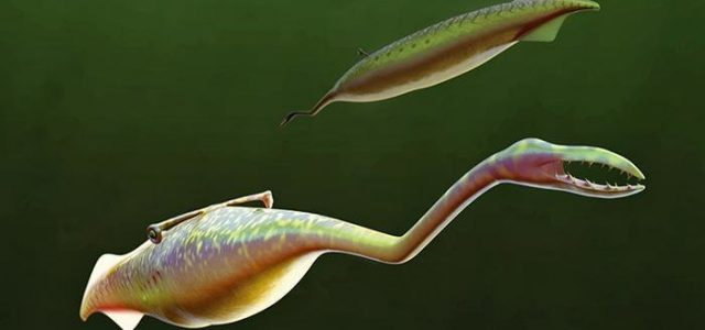 The Tully Monster